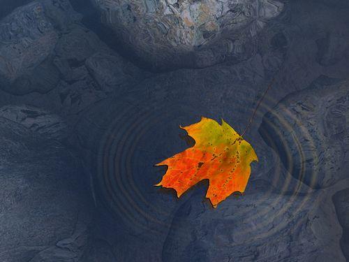 An_Autumn_Beauty,_Haiku