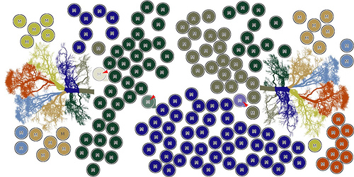Organized System