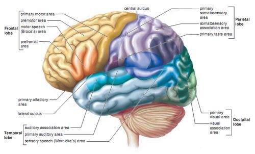 Willpower in the Brain