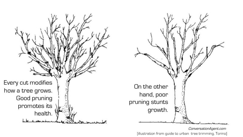 Trimming organizations