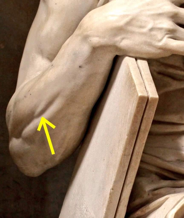 Michelangelo's Knowledge of Anatomy - Mose
