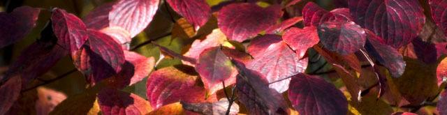 Fall_foliage_1