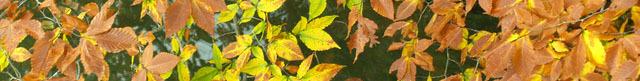 Pa_foliage